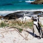 Partez en voyage de noces en Afrique du Sud