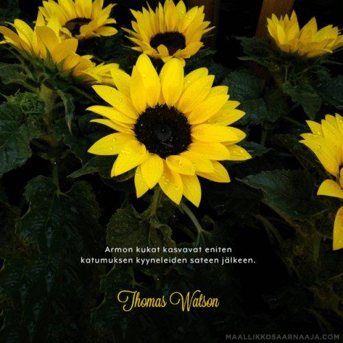 Armon kukat kasvavat eniten katumuksen kyyneleiden sateen jälkeen.