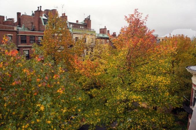 Vue depuis la maison, les arbres en automne... avant la tempête