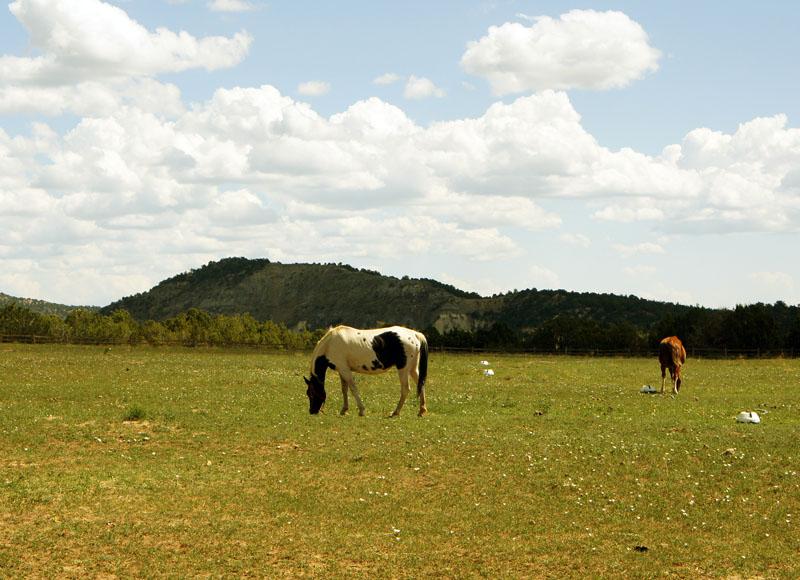 Mustangs, Utah