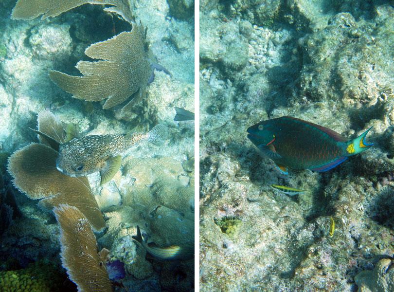 Coral Reef Florida Keys