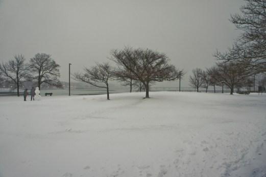 arbre avec neige