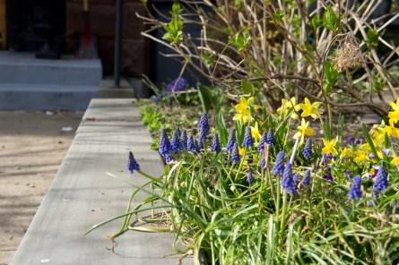 Allées de petites fleurs Boston