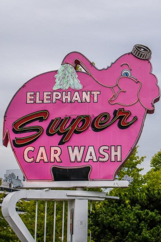 Seattle signe elephant rose