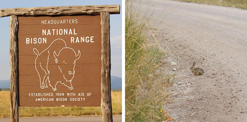 Bison Range Montana