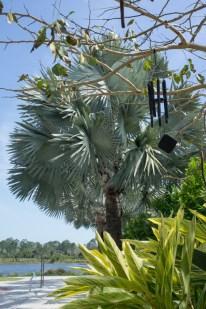 DAns le vent - Naples Botanical Garden - Floride