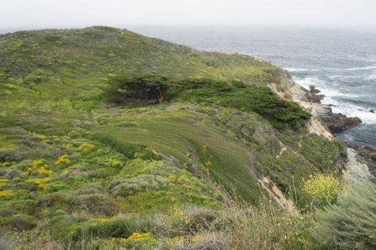 17 mile drive Monterey Carmel Californie coline verdoyante et fleurie