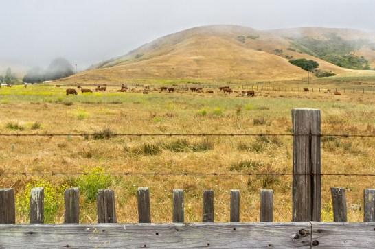 Big sur Californie Route 1 road trip les vaches