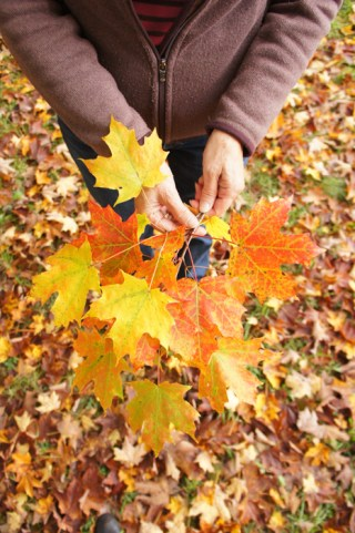 Feuilles d'automne Boston