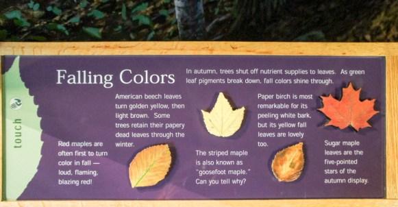 Les feuilles d'automnes - guide des couleurs