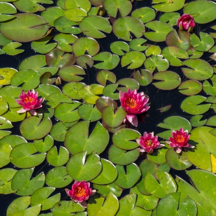 Botanical Garden - Denver Colorado-30
