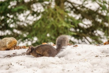 parc omega - écureuil noir| www.maathiildee.com