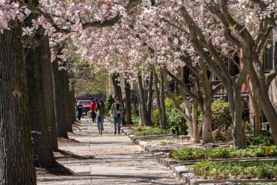 Printemps Boston floraison-1