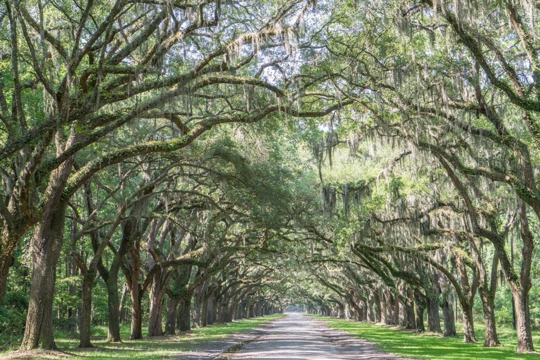 Le parc historique de Wormsloe Savannah Georgie-2