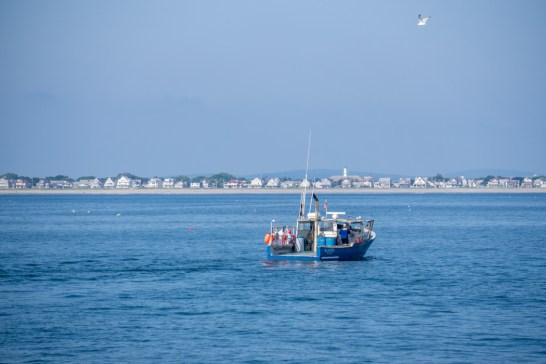 Voir les baleines a Boston-2