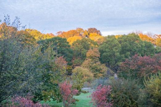 Fall Foliage Boston
