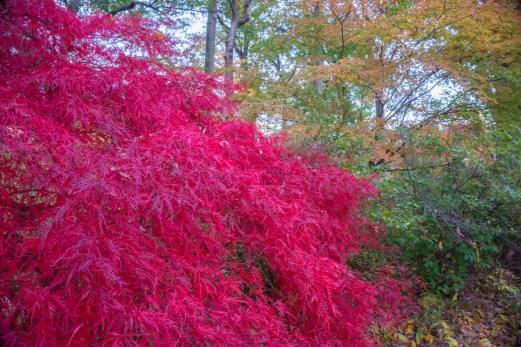 Fall Foliage Boston 1