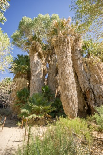 Joshua Tree Park California-19