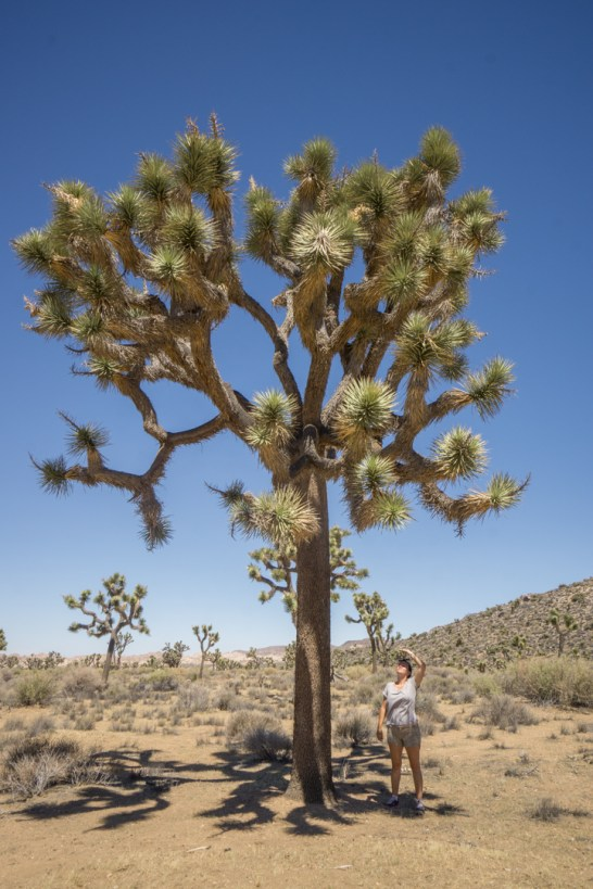 Joshua Tree Park California-8