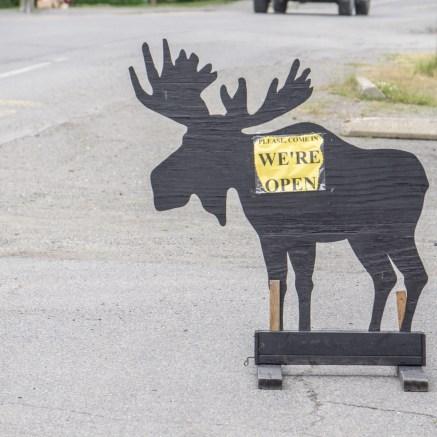 Moose Tour Maine-1