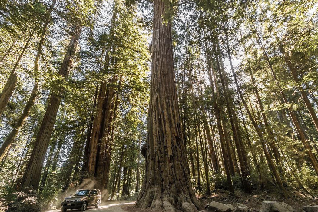 redwood-sequoia-california-1