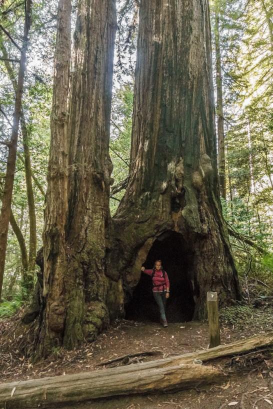 redwood-sequoia-california-10