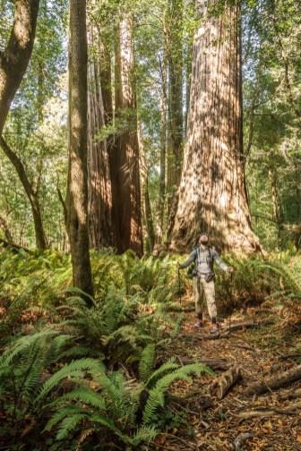 redwood-sequoia-california-12