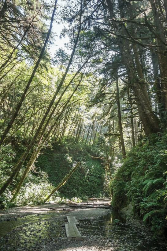 redwood-sequoia-california-28