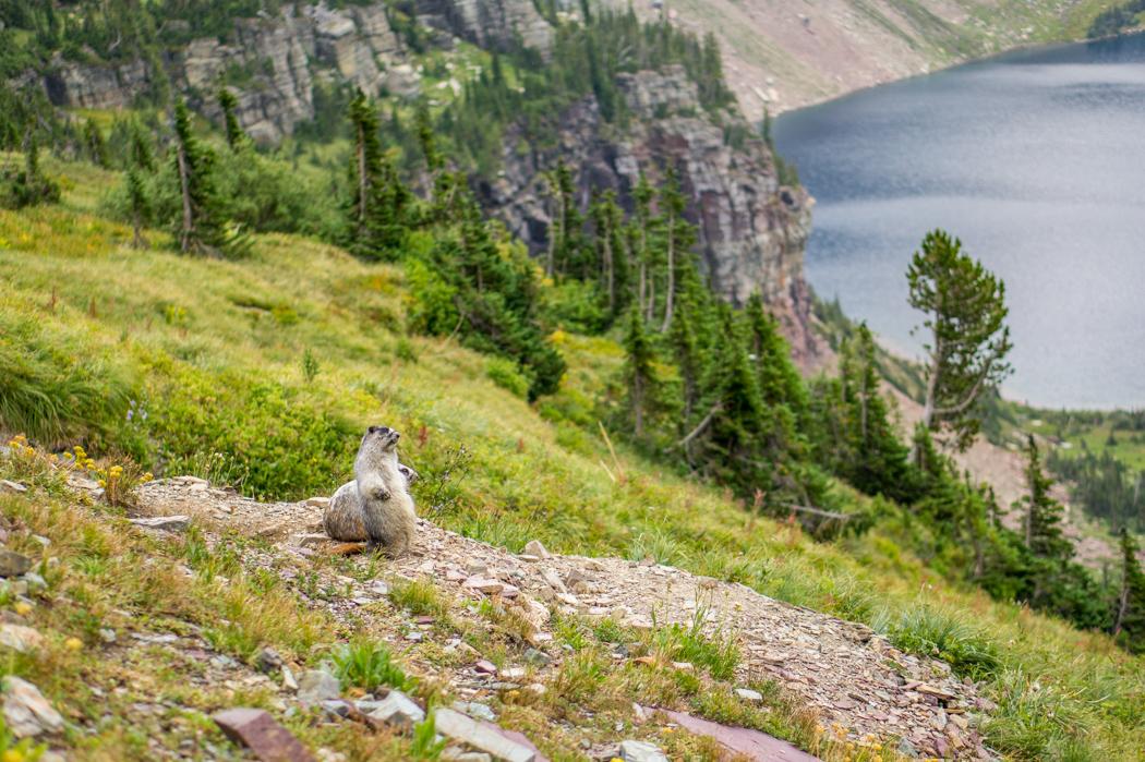 Marmotte Glacier Montana