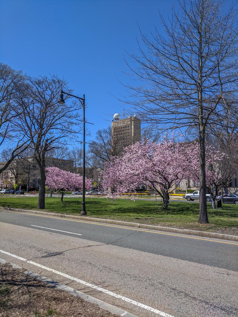 Boston printemps 6