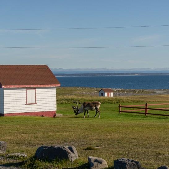 Viking trail newfoundland terre neuve 2