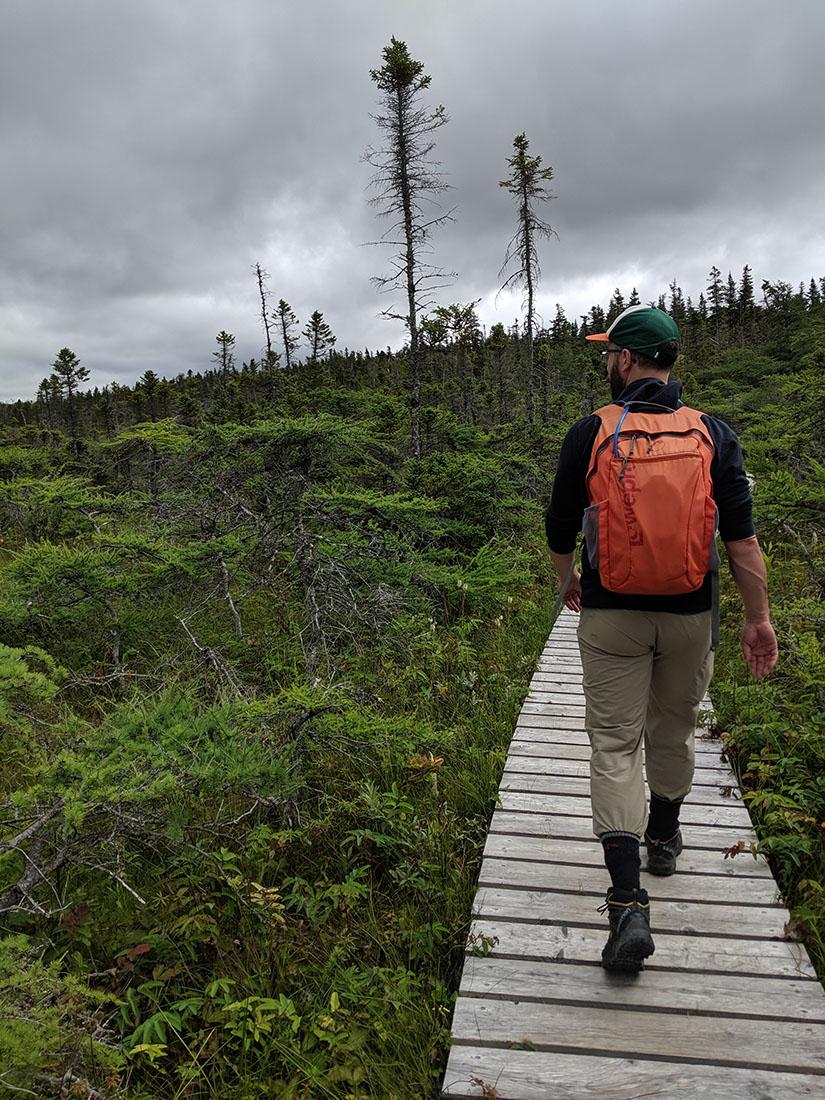 Gros morne promenade bois cascades