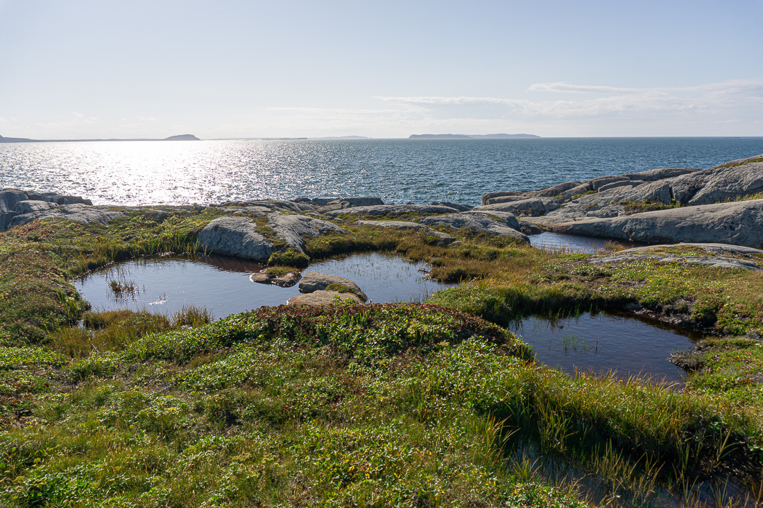 Quirpon island terre neuve le blog de mathilde 1 3