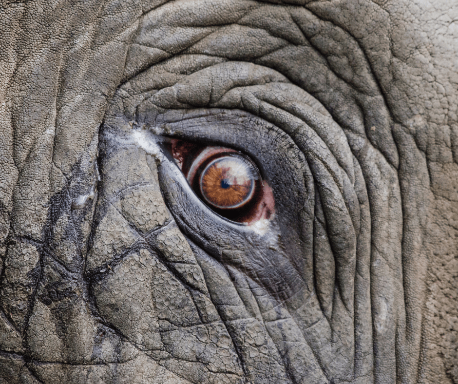 A Mabalingwe tale about elephants: a game ranger's story.