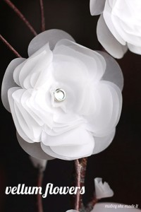 These flowers have an ethereal glow and are gorgeous around the house.