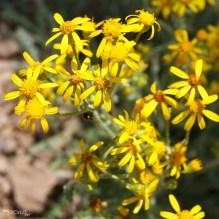 fauneflore (2)