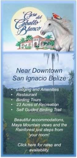 Casa del Cabballo Blanco Resort San Ignacio Town