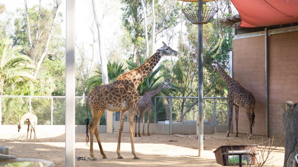 san diego zoo-1