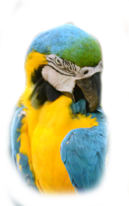 macaw parrot, bird, shiny