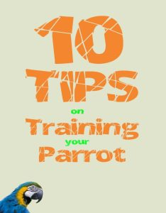 tips to train your parrot