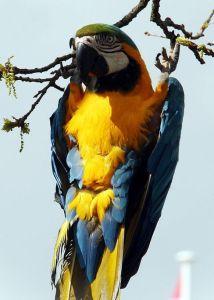 Macaw parrot pet bird fun