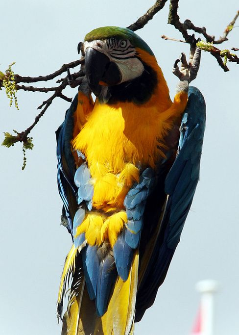 Macaw parrot pet bird fun