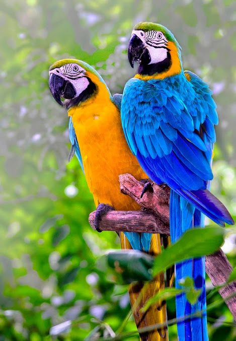 Parrot Fun Macaw
