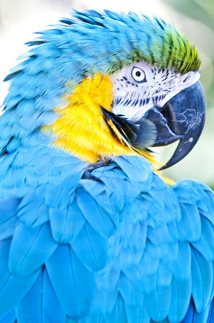 Macaw Are Parrot