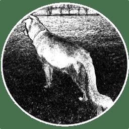 Wolf 1.35