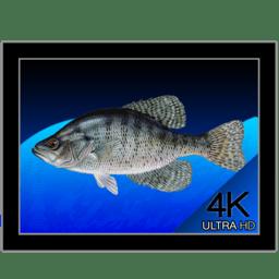 Aquarium 4K 1.0