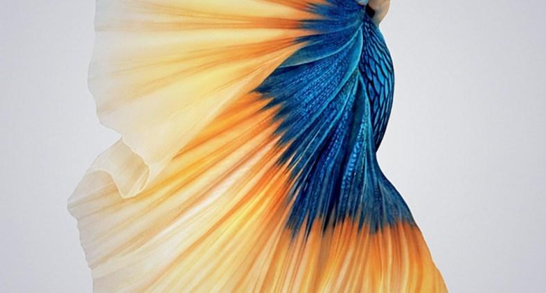 iPhone 6 Wallpaper - Sfondo pesce rosso iOS 9