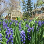 Spring Gardens of Macculloch Hall Historical Museum, Morristown, New Jersey
