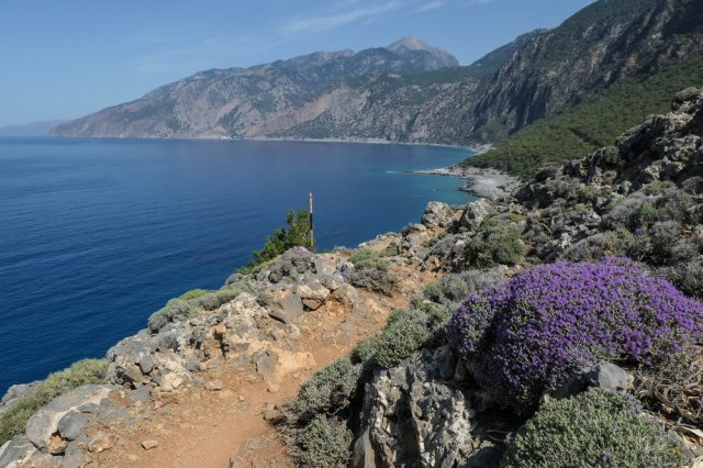 Buzzing Bees on the Wild Mountain Thyme - and the view on to Agios Pavlos and Roumeli (ISO 125 1/1000th f5.6 24mm Leica C-Lux)