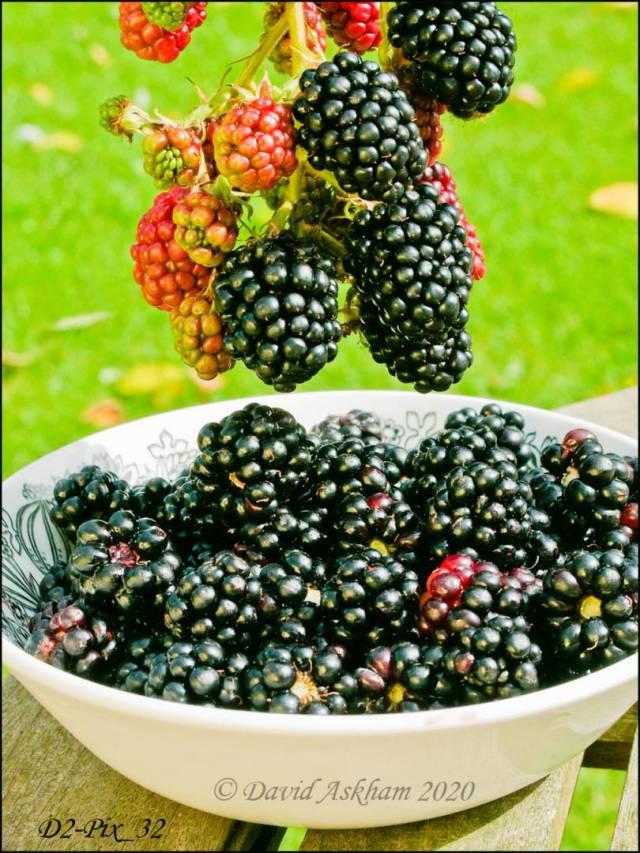 Blackberries. (Digilux 2 1/500 sec at f/6.3 Macro mode)